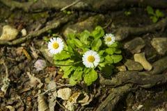 Fiori della sorgente nella foresta immagini stock libere da diritti