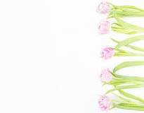 Fiori della sorgente su priorità bassa bianca Dentelli i tulipani Fotografia Stock
