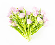 Fiori della sorgente su priorità bassa bianca Dentelli i tulipani Fotografia Stock Libera da Diritti