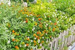 Fiori della sorgente in un giardino Immagine Stock Libera da Diritti