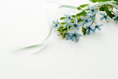 Fiori della stella blu immagine stock