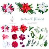 Fiori della stella di Natale, miscela delle piante stagionali e vettore delle erbe grande Fotografia Stock
