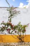 Fiori della via, Obidos, Portogallo Fotografia Stock Libera da Diritti