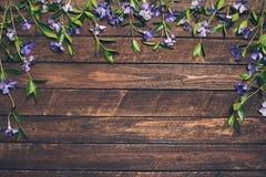 Fiori della vinca su fondo di legno rustico Flo della molla della vinca Fotografie Stock
