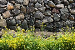 Fiori della violenza contro una parete tradizionale di Jeju Immagini Stock