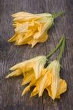 Fiori della zucca o fiori della zucca Fotografie Stock Libere da Diritti