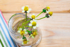 fiori delle margherite Immagini Stock