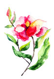 Fiori delle rose rosse Fotografia Stock