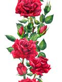 Fiori delle rose rosse - confine senza cuciture floreale Struttura dell'acquerello Fotografia Stock Libera da Diritti