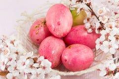 Fiori delle uova di Pasqua e del fiore di ciliegia Immagine Stock