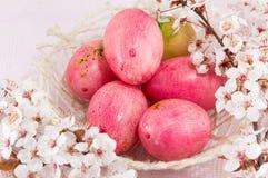 Fiori delle uova di Pasqua e del fiore di ciliegia Fotografie Stock Libere da Diritti