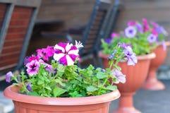 Fiori delle viole in vasi decorativi sulla via vicino al caffè immagini stock libere da diritti