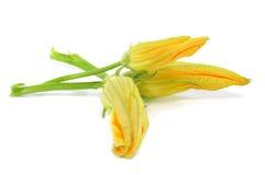 Fiori dello zucchini Fotografia Stock Libera da Diritti