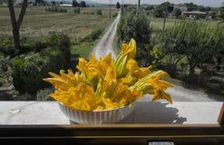 Fiori dello zucchini nella campagna Fotografia Stock