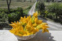 Fiori dello zucchini selezionati di recente nella campagna Fotografie Stock Libere da Diritti
