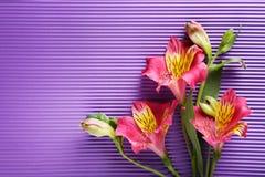 Fiori di Alstroemeria Fotografie Stock