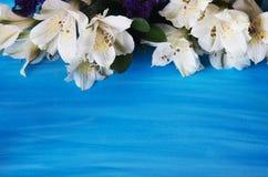 Fiori di Alstroemeria su un backgroun blu Immagini Stock Libere da Diritti