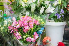 fiori di alstroemeria su un fondo nero Immagini Stock Libere da Diritti