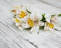 Fiori di Alstroemeria su una tavola Fotografia Stock