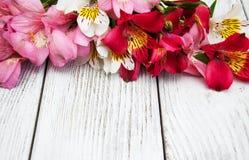 Fiori di Alstroemeria su una tavola Immagine Stock