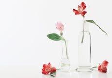 Fiori di Alstroemeria in vaso Fotografie Stock