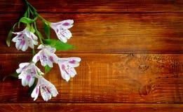 Fiori di Alstromeria sui precedenti del bordo di legno Fotografie Stock Libere da Diritti