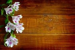 Fiori di Alstromeria sui precedenti del bordo di legno Immagini Stock Libere da Diritti
