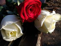 fiori di amore Fotografie Stock Libere da Diritti