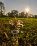 Fiori di amore della farfalla Immagini Stock Libere da Diritti