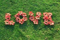 Fiori di amore su erba verde fotografia stock libera da diritti