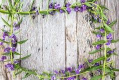 Fiori di Angelonia su fondo di legno Immagine Stock Libera da Diritti