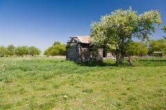 Fiori di Apple vicino alla vecchia casa rovinata Fotografia Stock
