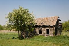 Fiori di Apple vicino alla vecchia casa rovinata Immagini Stock