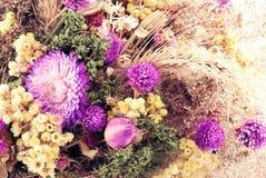 Fiori di autunno. Immagine Stock