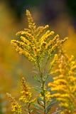 Fiori di autunno immagine stock