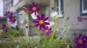 Fiori di autunno Fotografie Stock