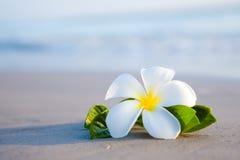 Fiori di bellezza sulla spiaggia Immagini Stock Libere da Diritti