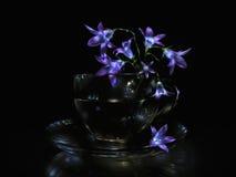 Fiori di Bluebell in tazza di vetro trasparente Fotografia Stock Libera da Diritti