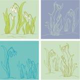 Fiori di bucaneve della primavera Illustrazione Vettoriale