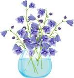 Fiori di campana della campanula in vaso di vetro Fotografia Stock