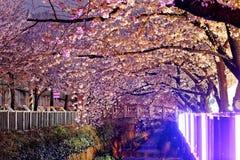 Fiori di ciliegia alla notte Fotografia Stock Libera da Diritti