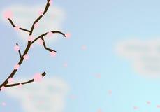 Fiori di ciliegia di caduta Fotografia Stock Libera da Diritti