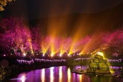 Fiori di ciliegia di notte Fotografia Stock
