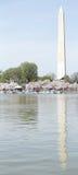 Fiori di ciliegia di Washington Fotografia Stock