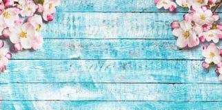 Fiori di ciliegia di fioritura con le vecchie plance di legno Immagine Stock