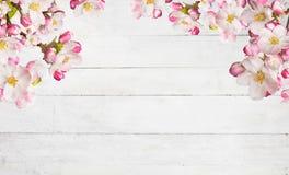 Fiori di ciliegia di fioritura con le vecchie plance di legno Immagine Stock Libera da Diritti