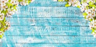 Fiori di ciliegia di fioritura con le vecchie plance di legno Fotografia Stock Libera da Diritti