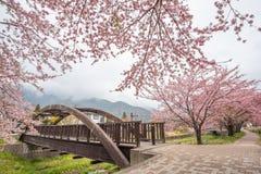Fiori di ciliegia lungo il percorso di camminata nel lago Kawaguchiko fotografie stock