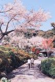 Fiori di ciliegia o Sakura con cielo blu Fotografie Stock