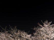 Fiori di ciliegia in piena fioritura con il fondo dell'orsa maggiore o dei trioni a Tokyo immagini stock